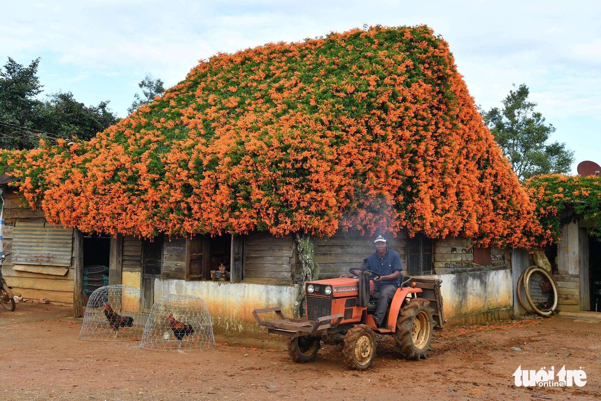 Ngôi nhà phủ hoa chùm ớt ở Lâm Đồng đã không còn - Thương trường 24h